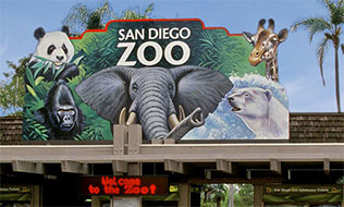 San Diego Zoo Airport Car Service